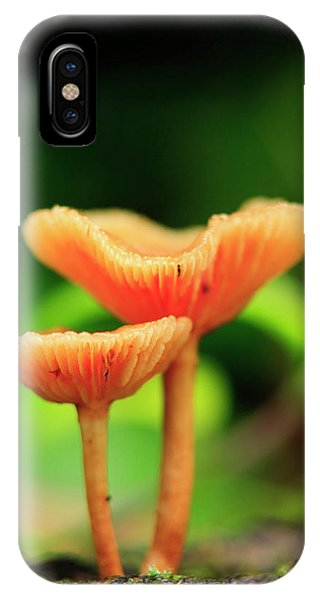 Far North Queensland iPhone Case - Bright Orange Mushrooms In The Heart by Paul Dymond