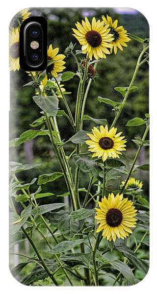 Bright Sunflowers IPhone Case