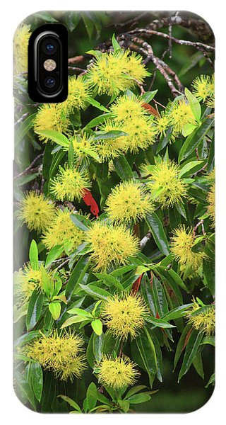 Far North Queensland iPhone Case - Bright Yellow Wattle Flowers Bloom by Paul Dymond