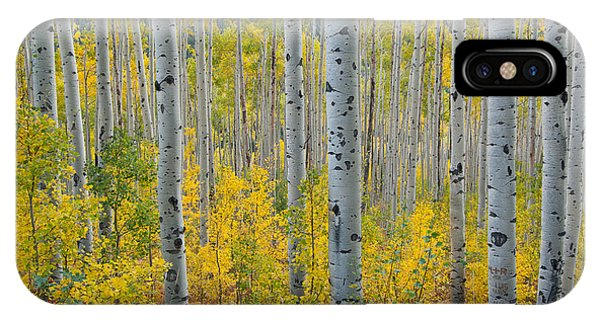 Brilliant Colors Of The Autumn Aspen Forest IPhone Case