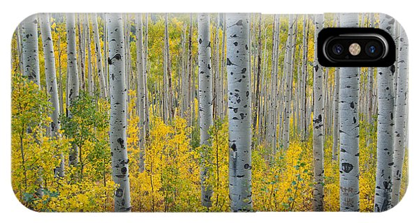 Brilliant Colors Of The Autumn Aspen Forest IPhone Case