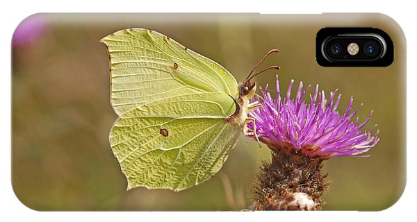 Brimstone On Creeping Thistle IPhone Case