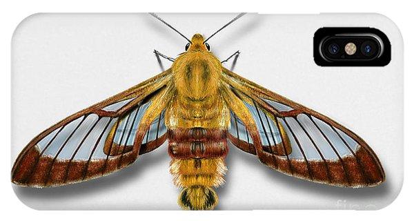 Broad-bordered Bee Hawk Moth Butterfly - Hemaris Fuciformis Naturalistic Painting -nettersheim Eifel IPhone Case
