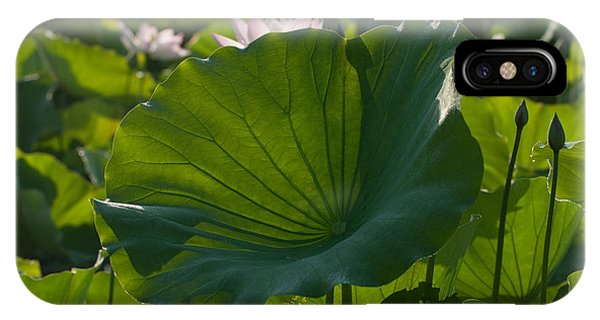 Broad Lily Leaf IPhone Case
