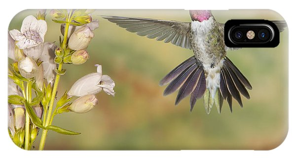 Broad Tailed Hummingbird 2 IPhone Case