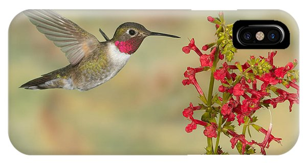 Broad-tailed Hummingbird 5 IPhone Case