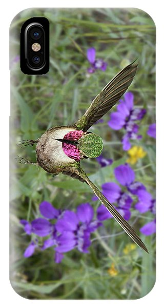 Broad-tailed Hummingbird - Phone Case IPhone Case