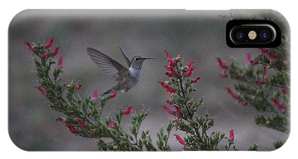 Broad Tailed Hummingbird IPhone Case