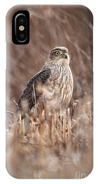 Broad-winged Hawk IPhone Case