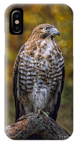 Broad Winged Hawk Phone Case by Todd Bielby
