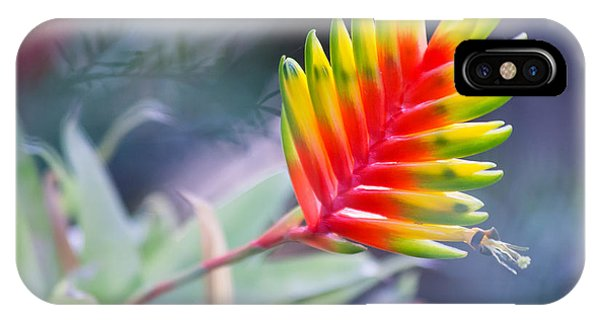 Bromeliad Beauty IPhone Case