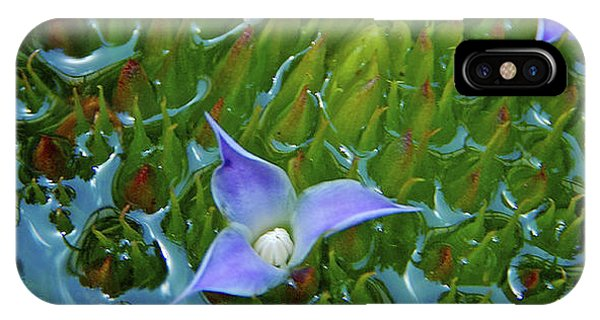 Bromeliad Pond IPhone Case