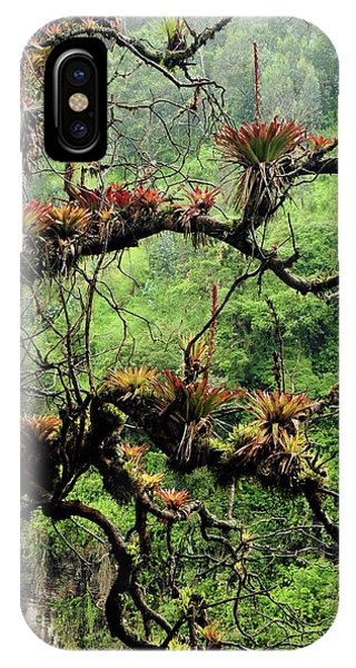 Monocotyledon iPhone Case - Bromeliads Growing On A Tree by Sinclair Stammers/science Photo Library