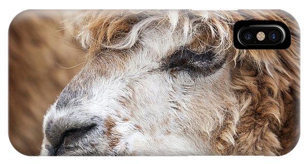 Brown Alpaca Phone Case by Graham Moore