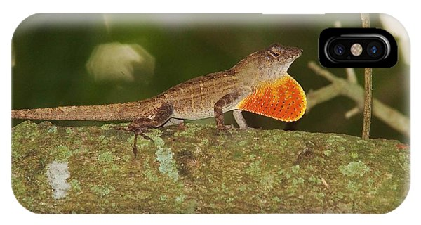 Brown Anole Splendor IPhone Case