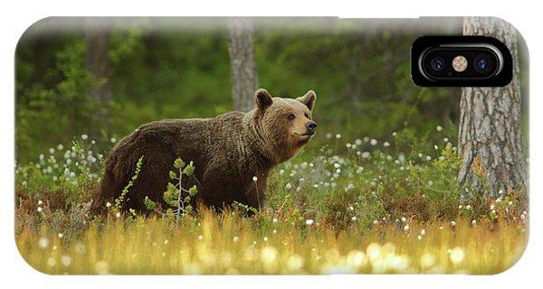 Brown iPhone Case - Brown Bear by Assaf Gavra