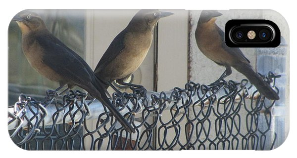 Brown Birds At Fernandina Beach Phone Case by Cathy Lindsey