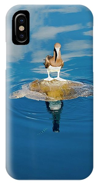 Boobies iPhone Case - Brown Booby And Marine Turtle by Christopher Swann