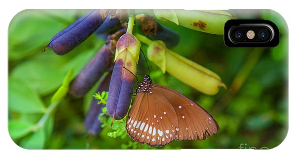 Tropes iPhone Case - Brown Butterfly In The Green Jungle by Gina Koch