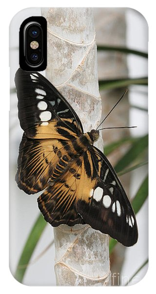 Brown Clipper Butterfly #2 IPhone Case