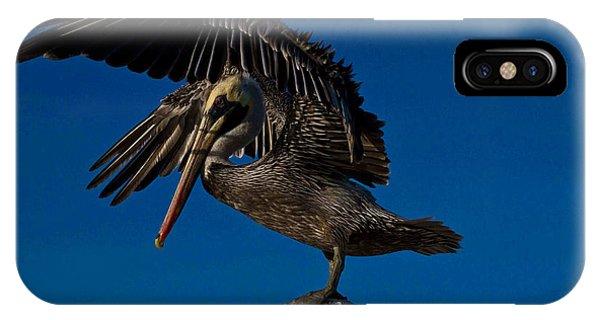 Brown King Pelican Phone Case by Kristine Patti