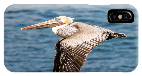 Brown Pelican Flying IPhone Case