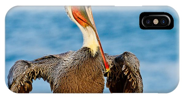 Brown Pelican In A Pose IPhone Case