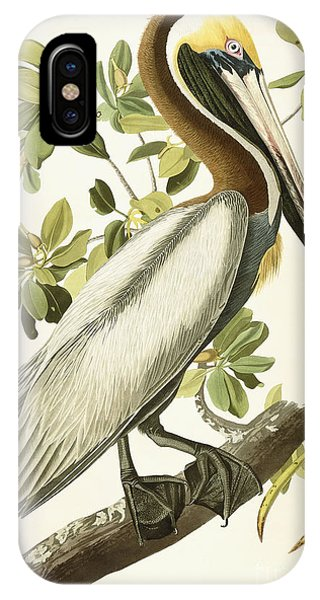 Pelican iPhone Case - Brown Pelican by John James Audubon