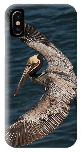 Brown Pelican Landing 2 IPhone Case