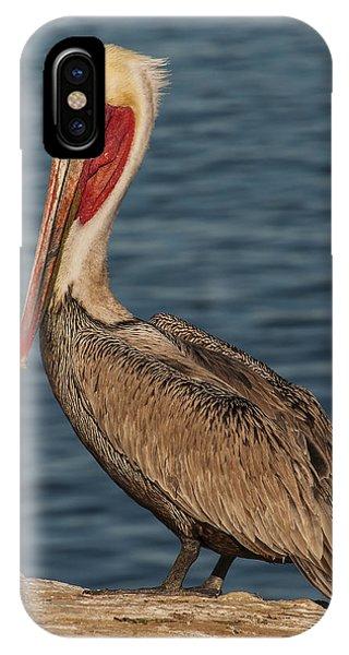 Brown Pelican Portrait 2 IPhone Case
