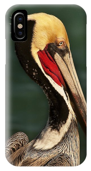 Brown Pelican Portrait IPhone Case