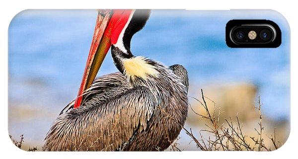 Brown Pelican Posing IPhone Case