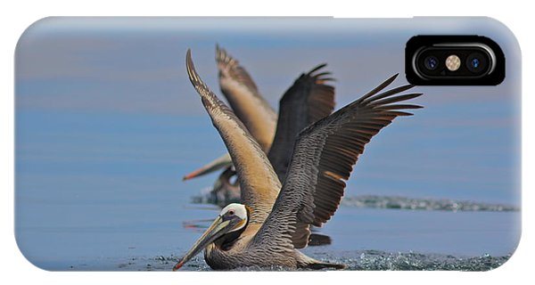 Brown Pelicans  IPhone Case