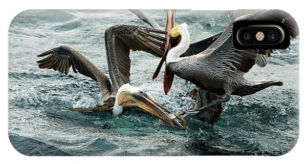Boobies iPhone Case - Brown Pelicans Stealing Food by Christopher Swann