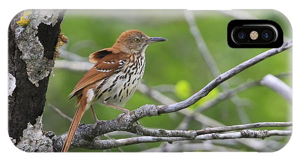 Brown Thrasher Phone Case by Gary Hall