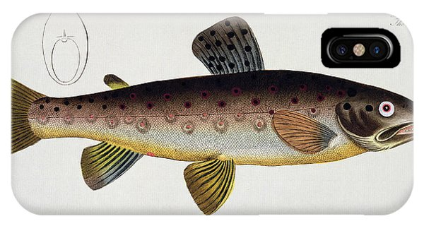 Ichthyology iPhone Case - Brown Trout by Andreas Ludwig Kruger