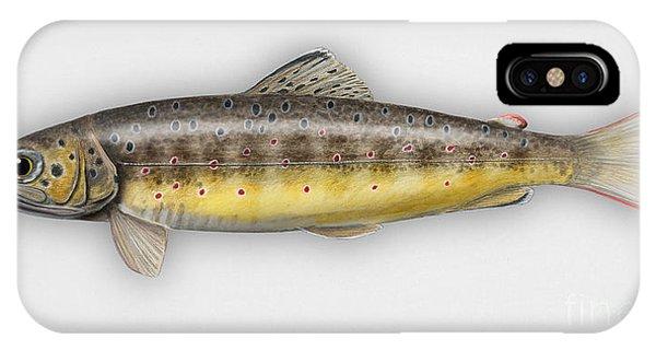 Brown Trout - Salmo Trutta Morpha Fario - Salmo Trutta Fario - Game Fish - Flyfishing IPhone Case
