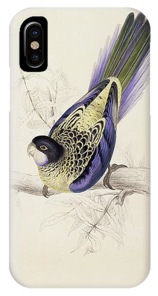Browns Parakeet IPhone Case