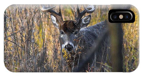 Brush Buck IPhone Case