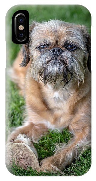 Griffon iPhone Case - Brussels Griffon by Edward Fielding