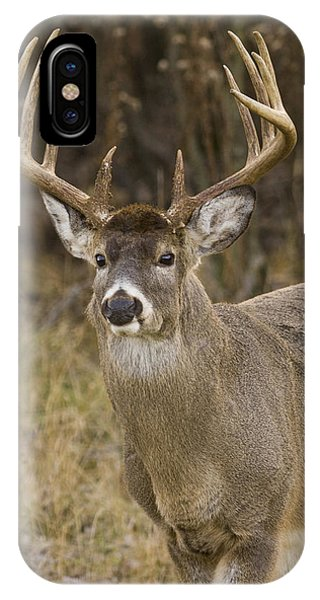 Buck Approaching IPhone Case