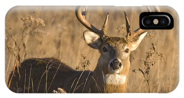 Buck In Field IPhone Case