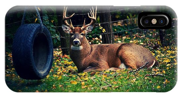 Buck In The Back Yard IPhone Case