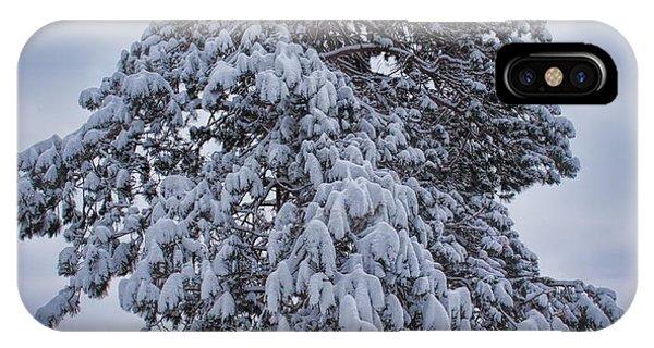 Buck Lake Flocked Pine IPhone Case