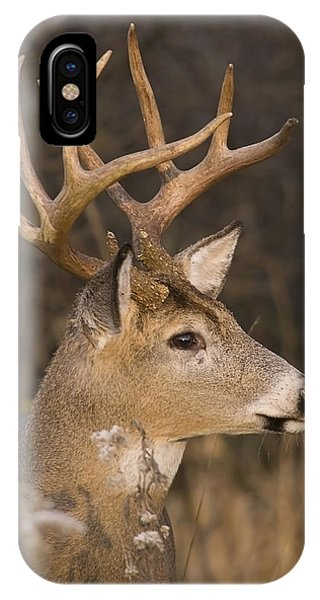 Buck Portrait IPhone Case