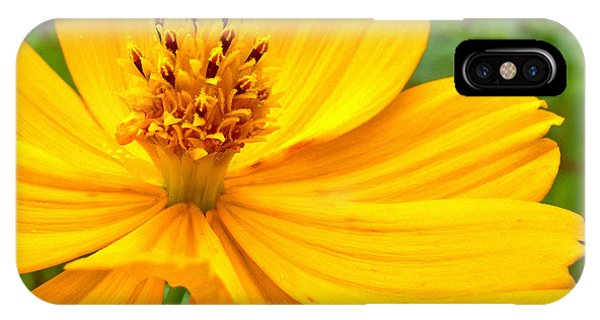 iPhone Case - Budding Bouquet by Kelly Holm