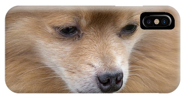 Pomeranian iPhone Case - Buddy by Ann Horn