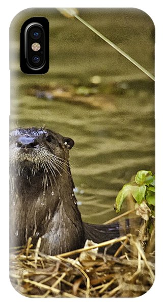 Buffalo National River Otter  IPhone Case