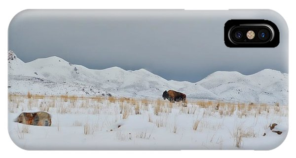Buffalo Winter Phone Case by Dianna Lindahl