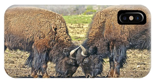 Buffaloes At Play IPhone Case